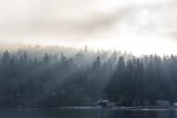 Washington State, Shafts of Morning Light Piercing Fog Make God Rays Through Trees Photographic Print by Trish Drury