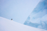 South Georgia Island. Chinstrap Penguin on Iceberg Photographic Print by Jaynes Gallery