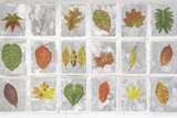 Falkland Islands, Stanley. Collage of Leaves in Windows Photographic Print by Jaynes Gallery