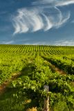 Washington State, Yakima Valley. Vineyard Just to the North of Sunnyside Photographic Print by Richard Duval