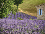 France, Provence. Lavender Fields Near a Home Photographic Print by Julie Eggers