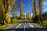 Poplar Trees in Autumn at Entrance to Lawrence, Central Otago, South Island, New Zealand Photographic Print by David Wall