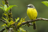 Costa Rica, Arenal. Close-Up of Social Flycatcher Photographic Print by Jaynes Gallery