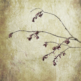 Washington State, Seabeck. Plum Tree Branch with Spring Buds Photographic Print by Jaynes Gallery