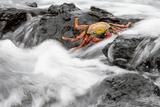 Ecuador, Galapagos Islands, Fernandina, Punta Espinoza Photographic Print by Ellen Goff