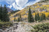 Colorado, White River National Forest, Autumn Color on Maroon Creek Trail Photographic Print by Rob Tilley