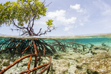 Over and under Water Photograph of a Mangrove Tree , Background Near Staniel Cay, Bahamas Photographic Print by James White