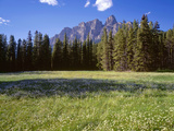 Canada, Alberta, Banff National Park, Daisies Bloom in Meadows Beneath Castle Mountain Photographic Print by John Barger