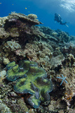 Indonesia, West Papua, Cenderawasih Bay. Diver Above Coral Reef Photographic Print by Jaynes Gallery