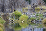 Beaver Pond, Dam and House Photographic Print by Ken Archer