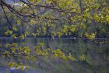 Quiet Morning in Fall, Cabot Trail, Cape Breton, Nova Scotia, Canada, North America Photographic Print by Patrick J. Wall