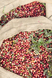 Massachusetts, Wareham, Cranberries Photographic Print by Jim Engelbrecht