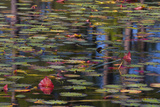 Pond Close-Up with Lily Pads and Reflections Photographic Print by Mallorie Ostrowitz