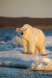 Canada, Wager Bay and Ukkusiksalik National Park Photographic Print by Paul Souders