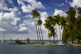 Palm Trees at Entrance to Marigot Bay, St. Lucia, West Indies Photographic Print by Brian Jannsen