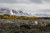 South Georgia Island, Prion Island. Landscape with Juvenile Fur Seal Photographic Print by Jaynes Gallery