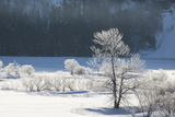 Canada, Nova Scotia, Cape Breton, Cabot Trail, Frosted Trees in Margaree Photographic Print by Patrick J. Wall