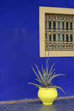 Africa, Morocco, Marrakesh. Cactus in a Bright Yellow Pot Against a Vivid Majorelle Blue Wall Photographic Print by Alida Latham