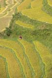 Asia, Bhutan, Trongsa Area. Rice Paddies Photographic Print by Ellen Goff