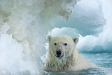 Polar Bear Swimming Through Melting Sea Ice Near Harbor Islands,Canada Photographic Print by Paul Souders