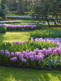 Sunlit Spring Garden with Hyacinth and Daffodils Photographic Print by Anna Miller