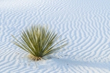 New Mexico, White Sands National Monument. Close-Up of Yucca and Sand Ripples Photographic Print by Jaynes Gallery