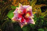 Hibiscus Flower in the Galaxy Garden, Paleaku Gardens Peace Sanctuary, Hawaii, Usa Photographic Print by Russ Bishop
