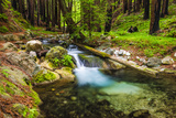 Hare Creek and Redwoods, Limekiln State Park, Big Sur, California, Usa Photographic Print by Russ Bishop