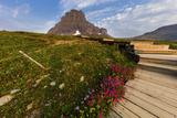 Alpine Wildflowers Along Boardwalk , Glacier National Park, Montana Photographic Print by Chuck Haney