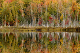 Birch Trees and Autumn Colors Reflected on Red Jack Lake, Upper Peninsula of Michigan Photographic Print by Adam Jones