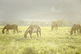 Philmont Scout Ranch Horses at Pasture before Sunset. Cimarron, New Mexico Photographic Print by Maresa Pryor