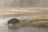 Bison on Foggy Morning Along Madison River, Yellowstone National Park, Wyoming Photographic Print by Adam Jones