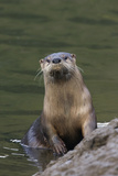 River Otter Photographic Print by Ken Archer