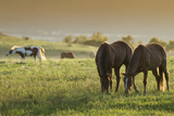 Horses Grazing before Sunset, Philmont Scout Ranch, Cimarron, New Mexico Photographic Print by Maresa Pryor