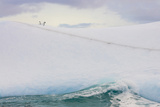 South Georgia Island. Chinstrap Penguins Ride an Iceberg Photographic Print by Jaynes Gallery