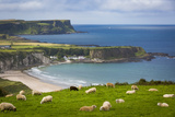 Sheep Grazing Above the Village of Portbraddan and the North Coast of County Antrim, Uk Photographic Print by Brian Jannsen