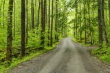 Upper Tremont Road in Spring, Great Smoky Mountains National Park, Tennessee Photographic Print by Adam Jones
