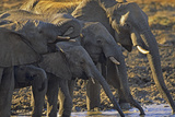African Elephants Drinking from a Waterhole, Kenya, Africa Photographic Print by Tim Fitzharris