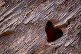 Utah, Capitol Reef National Park. Heart-Shaped Hole in Rock Photographic Print by Jaynes Gallery