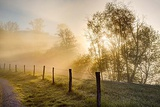Sunbeams Through Trees at Sunrise, Cades Cove, Great Smoky Mountains National Park, Tennessee Photographic Print by Adam Jones