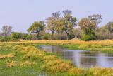 Botswana. Okavango Delta. Khwai Concession. Riparian Forest Photographic Print by Inger Hogstrom