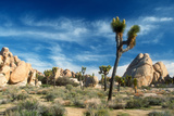 Joshua Trees Among the Large Granite Rocks of Joshua Tree National Park Photographic Print by John Alves