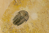 Fossils at Dinosaur Discovery, Johnson Farm, St. George, Utah Photographic Print by Michael DeFreitas