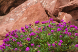 Wildflowers, Canyon De Chelly National Monument, Usa Photographic Print by Russ Bishop