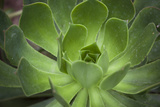 Africa, Morocco, Marrakesh. Close-Up of a Cactus in a Botanical Garden Photographic Print by Alida Latham