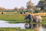 Botswana. Okavango Delta. Khwai Concession. Elephant Drinking Photographic Print by Inger Hogstrom