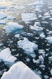 Greenland, Disko Bay, Ilulissat, Floating Ice at Sunset Photographic Print by Walter Bibikow