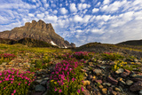 Alpine Wildflowers in the Hanging Gardens of Logan Pass in Glacier National Park, Montana, Usa Photographic Print by Chuck Haney