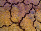 Close-Up Shot of Cracked Earth Photographic Print by Mallorie Ostrowitz