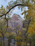 Abraham Peak Seen Through Trees, Zion National Park, Utah Photographic Print by Tim Fitzharris